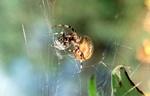 И опять паук