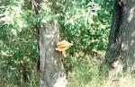 Грибы древесные