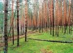 Лес на холме