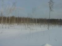 Highlight for album: Зимняя Мещёра-2 19-22 февраля